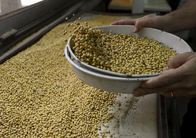 中國國際商會:俄羅斯應積極參與對華大豆出口