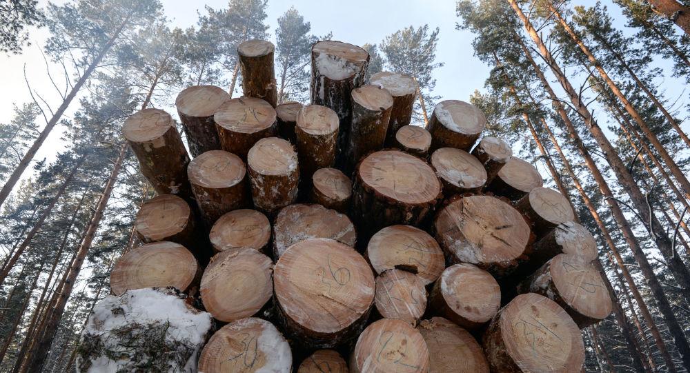 中國投資者將在俄境內開設木材廢料加工廠