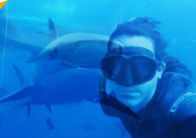 潛水者拍下與鯊魚同游畫面