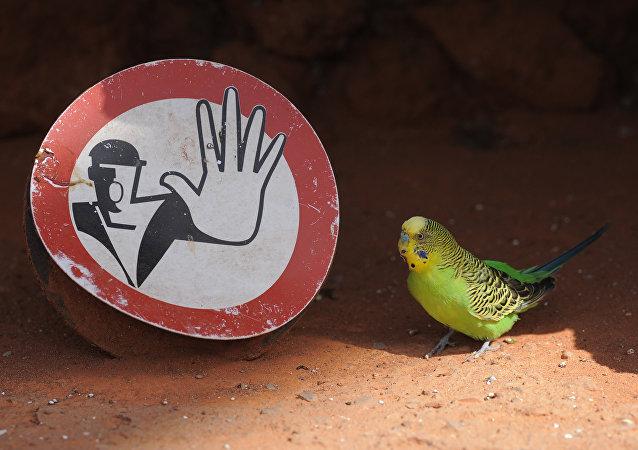 入獄的鸚鵡被歸還給主人