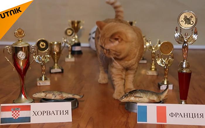 看貓咪如何預言世界杯決賽