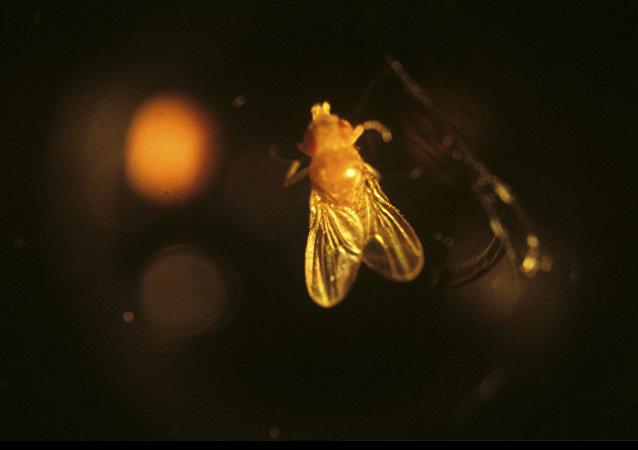 專家治癒患漸凍人症的果蠅