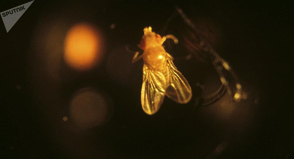 科學家發現一種能把昆蟲變僵屍的真菌