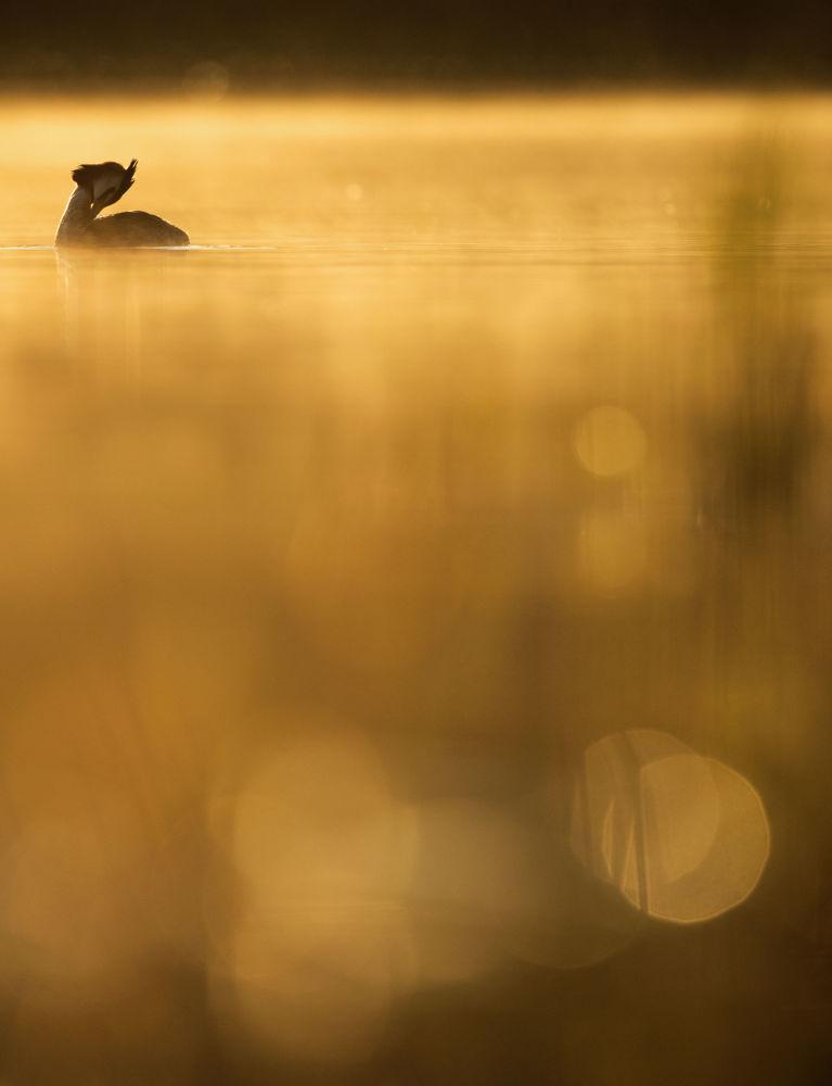 2018年度鳥類攝影師大賽獲獎者