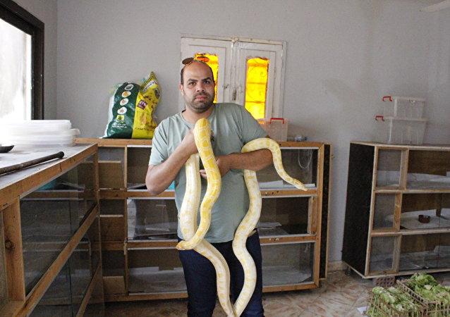 埃及捕蛇者收集蛇毒用於全球藥物生產