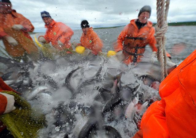 因中國港口關閉濱海邊疆區的漁民向韓國和日本出口產品