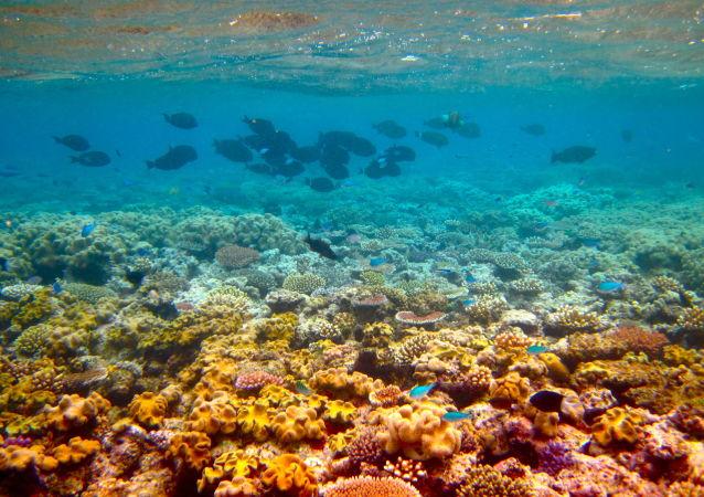 澳大利亞的大堡礁