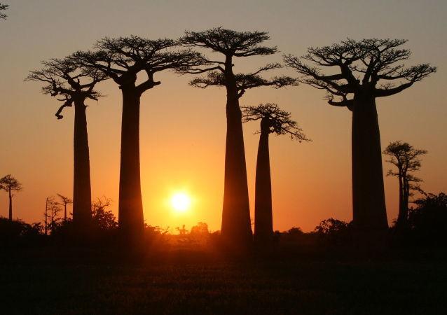 馬達加斯加島