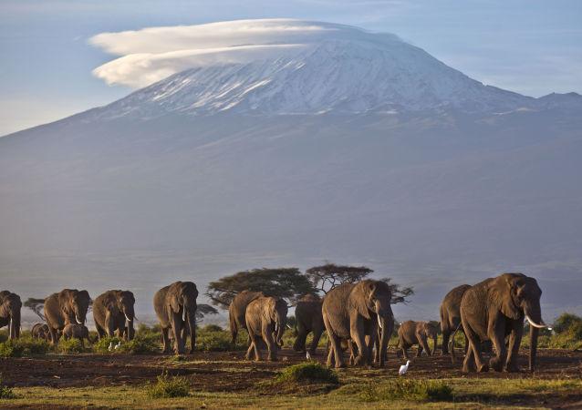 津巴布韋最大國家公園中的50多頭大象死於飲食短缺