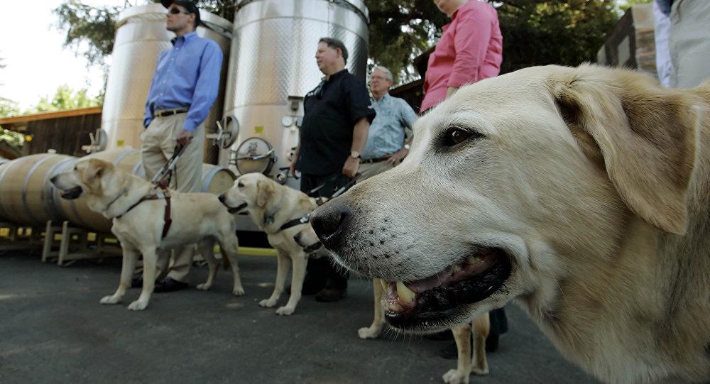 科學家稱已教會狗來根據氣味判斷瘧疾