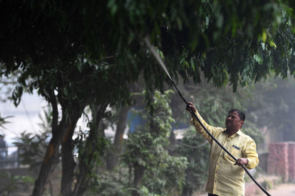 市政工作人員在沿街向樹木噴水,以降低印度新德里的空氣污染水平