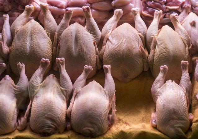 俄農業部:2019年俄禽肉對華出口額有望突破一億美元