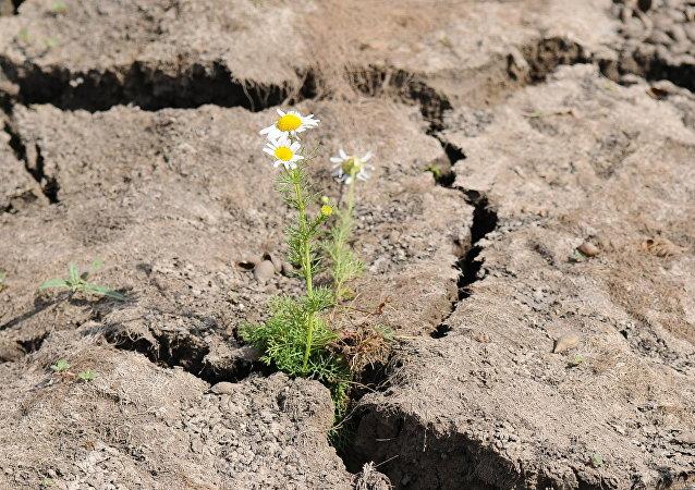 俄羅斯將幫助中國恢復土壤肥力