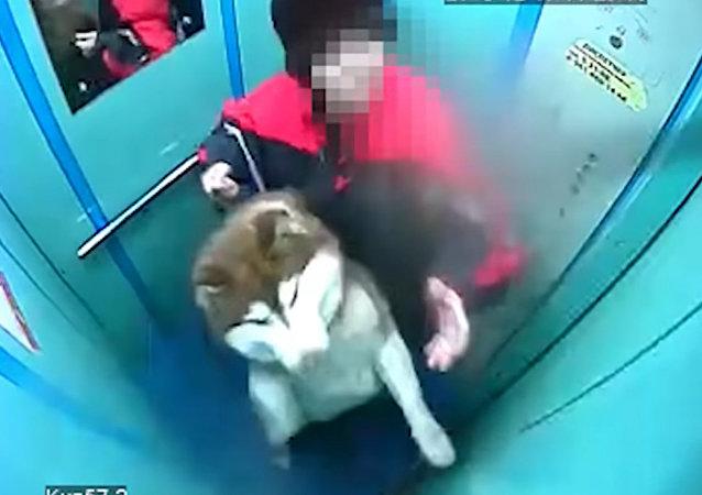 在克麥羅沃州一隻狗狗差點被悶死在電梯里