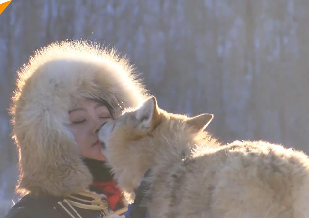 內蒙古女孩以嘴餵狼讓人嘖嘖稱道