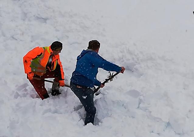 奧地利 人從雪中挖出一隻山羊