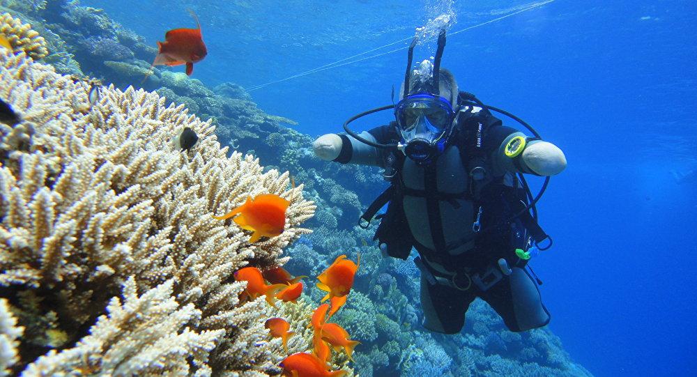 帕夫連科在紅海練習下潛
