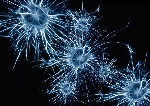 大腦的神經元