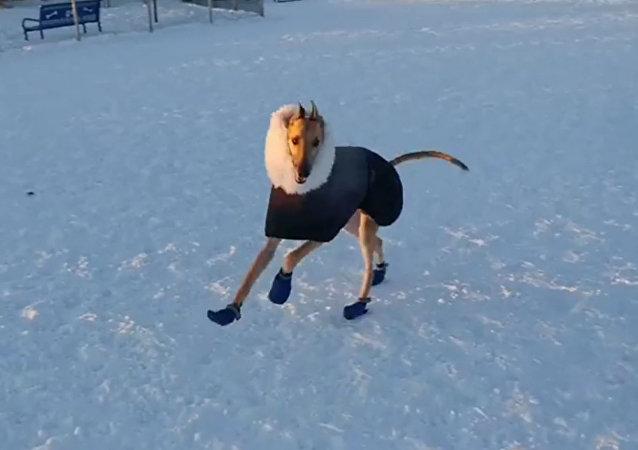 狗狗雪地撒歡兒 盡享好天氣