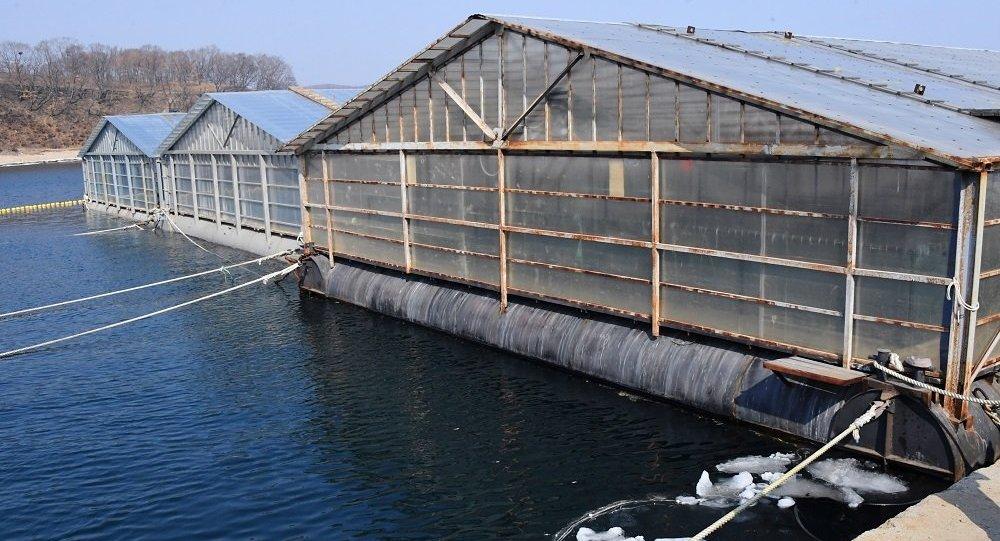 社會活動家表示法院裁定「鯨魚監獄」中的虎鯨乃非法捕撈所得