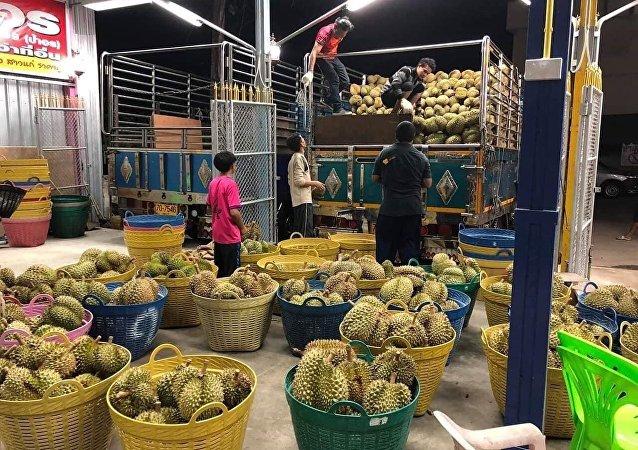 外媒:疫情未能阻擋中國對泰國榴蓮需求的增長