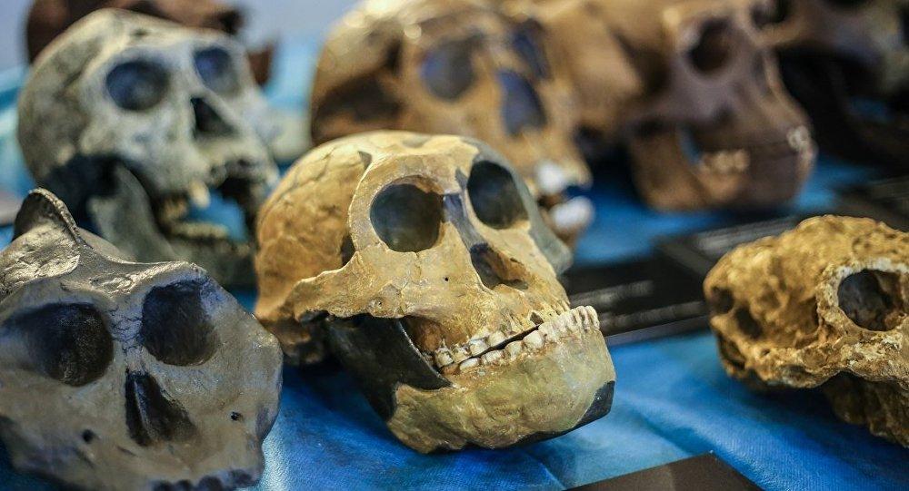 學者:遠古人的牙齒類似高爾夫球