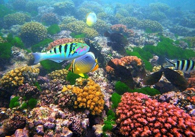 魚粘液細菌將成新抗生素來源