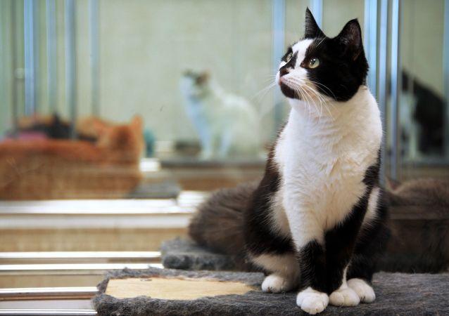 紅迪網用戶驚訝於一隻貓同時看兩面鏡