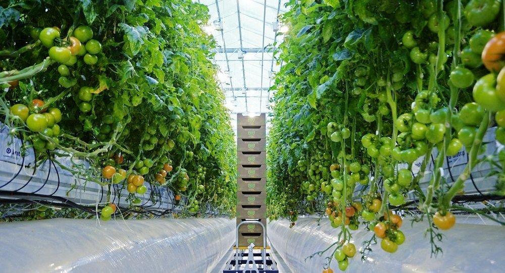 綏芬河自貿片區320噸蔬菜銷往俄濱海邊疆區各大農貿市場