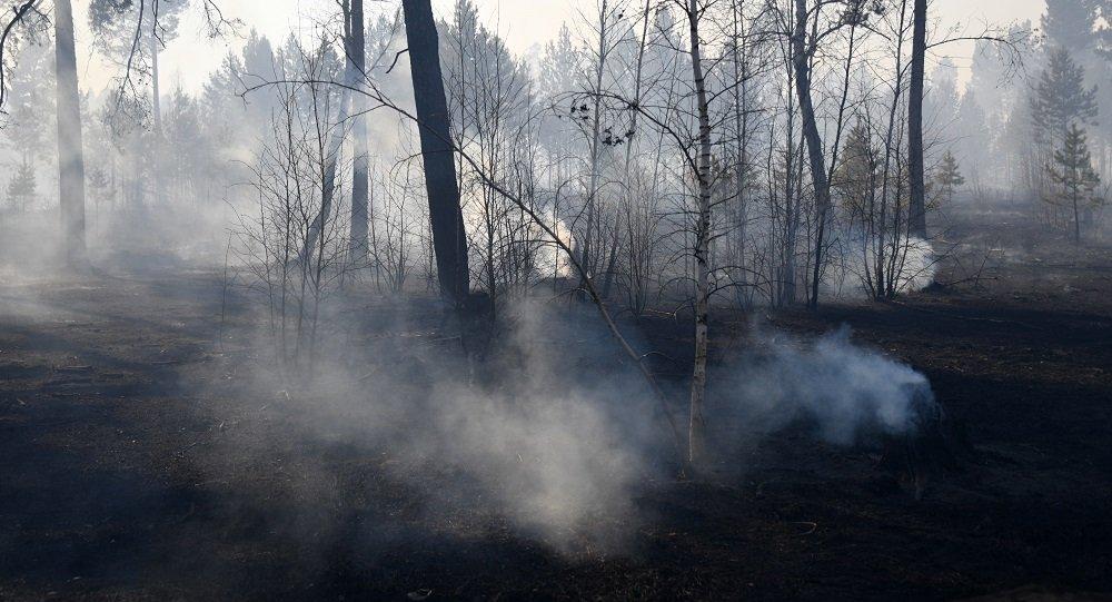 俄遠東地區一晝夜撲滅20處林火