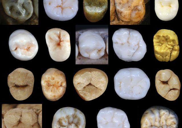 尼安德特人與現代人早在80萬年前就已分化