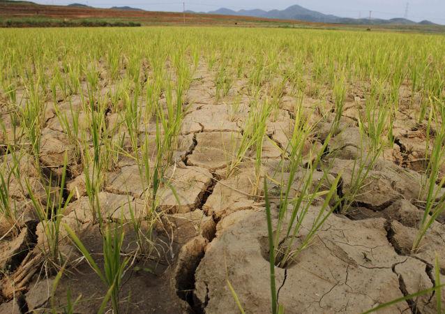 俄外交部:俄羅斯在朝鮮乾旱背景下將繼續為其提供人道主義援助
