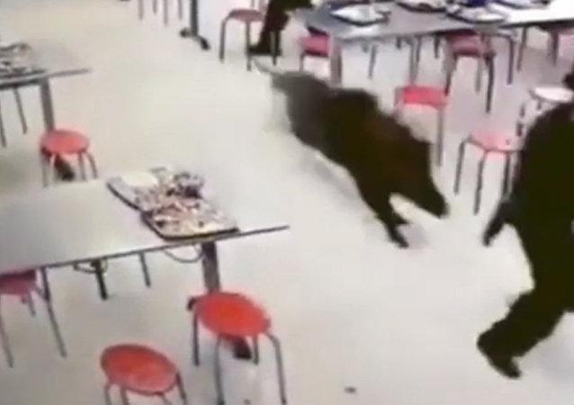 野豬大鬧中國工廠食堂