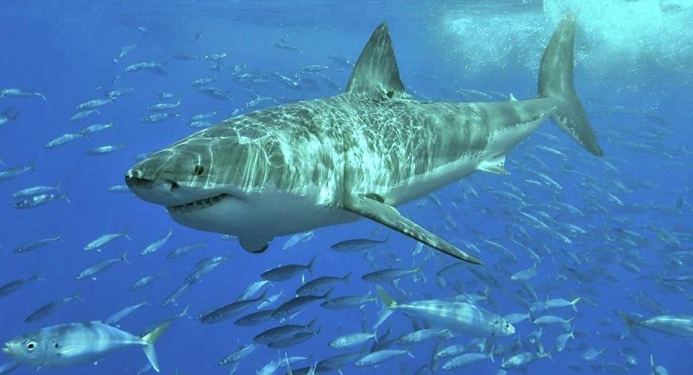 一名女大學生在巴哈馬遭遇三條鯊魚襲擊後死亡