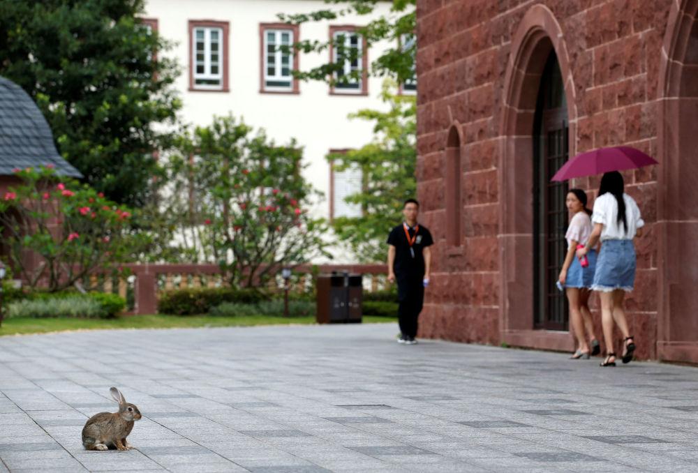 華為辦公大樓院子里的兔子,中國東莞