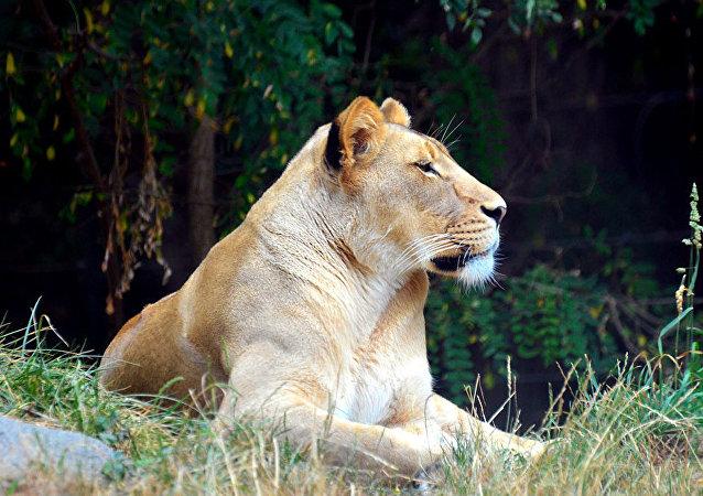人類侵入野生環境會增加流行病的風險