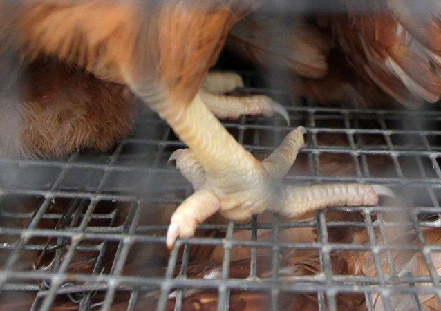中國東莞疾控中心專家在自俄進口的凍雞爪外包裝上發現新冠病毒