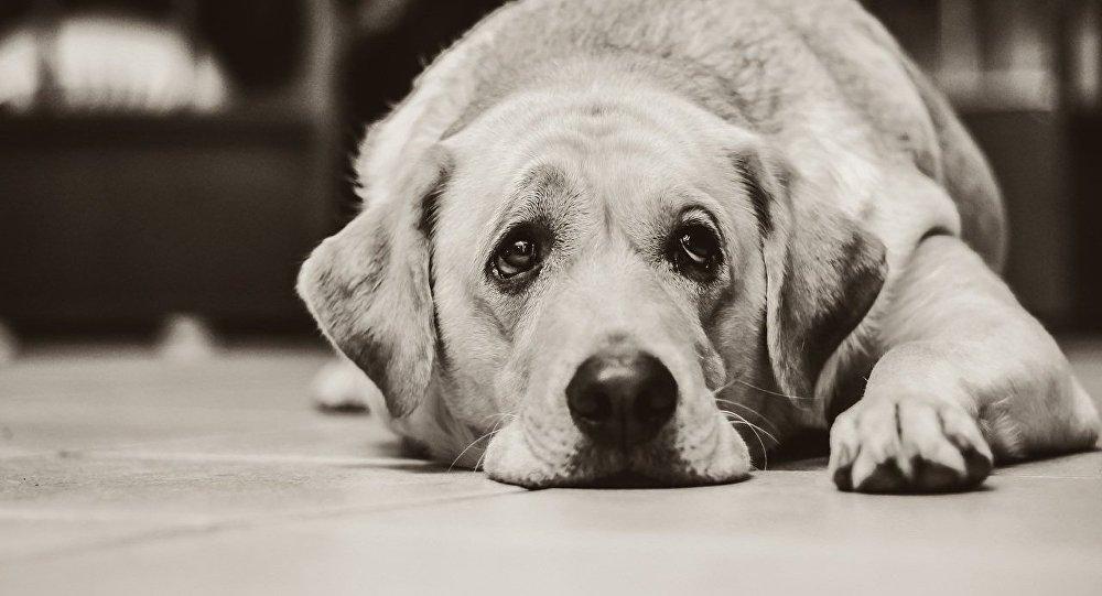狗的溫柔導致女主人截肢