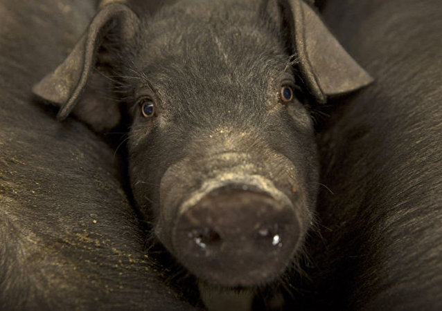 中國海關總署:英國Tulip公司一家豬肉企業因檢出新冠病毒自主暫停對華出口