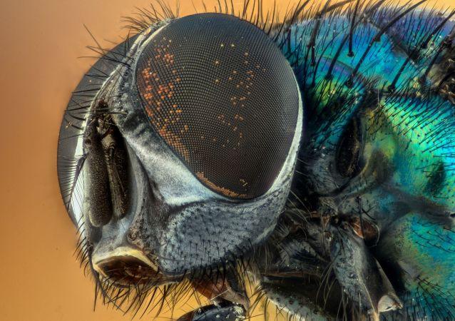 生物學家指出家蠅的危險性