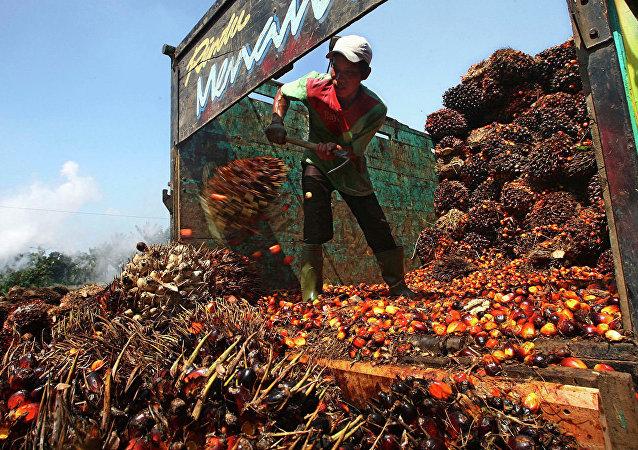 棕櫚油廠卸載原料