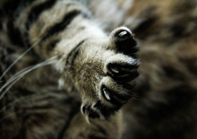 貓咪「土豆」因一雙大眼走紅網絡