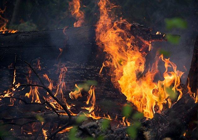俄聯邦航空護林局:俄林火過火面積已增加近八千公頃