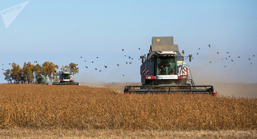 中國可購買俄羅斯各地大豆