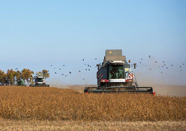 普京:俄希望滿足中國對大豆的需求 但未對此種規模做好準備