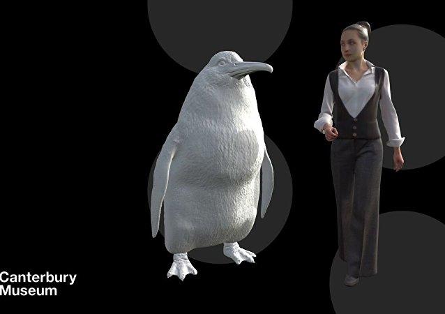 新西蘭發現和人一樣高的企鵝