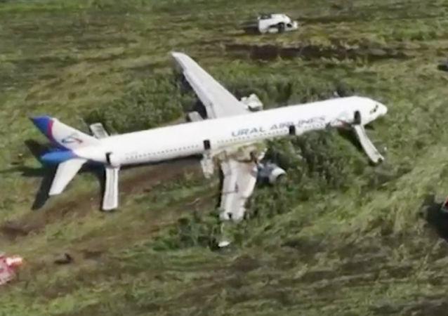 A321起飛前已對莫斯科州機場跑道實施驅鳥檢查