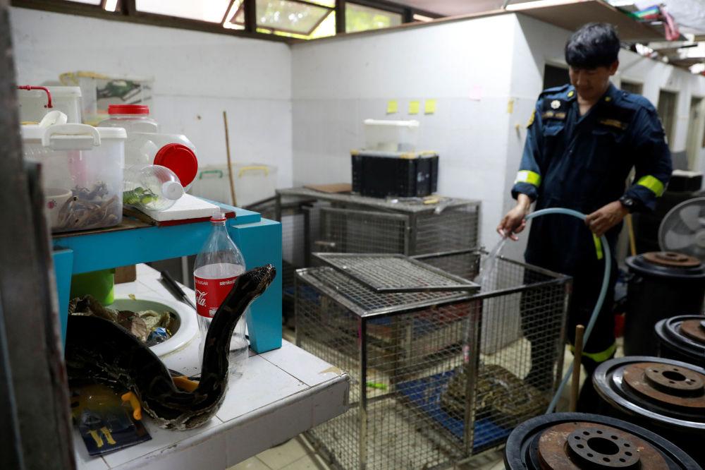 泰國曼谷消防站清洗蛇籠。