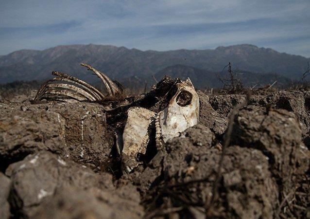 智利遭受幾十年來最大的乾旱