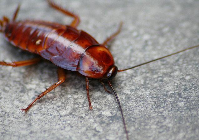 科學家:昆蟲數量正急劇減少